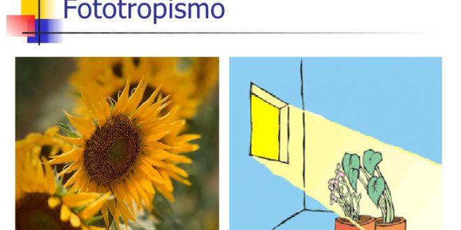 Il Fototropismo e la costante ricerca della luce