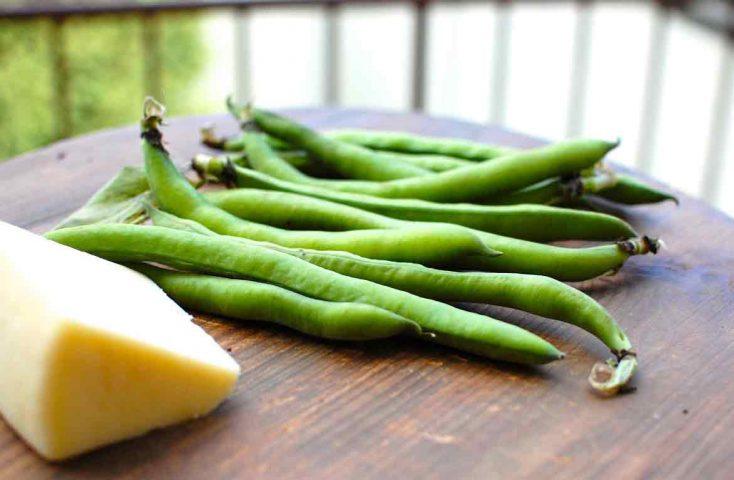 E' giunta la primavera anche a tavola: ricette con fave e pecorino