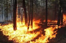 Arrestato pastore di Villarosa per incendio boschivo