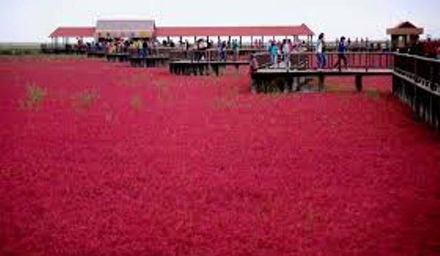 DAL MONDO - In Cina anche il mare è rosso
