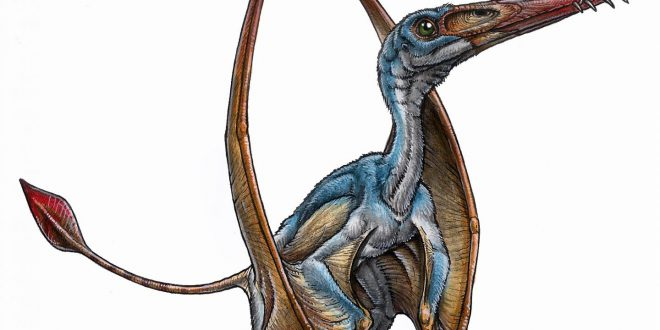 Scoperta una nuova specie di pterosauro