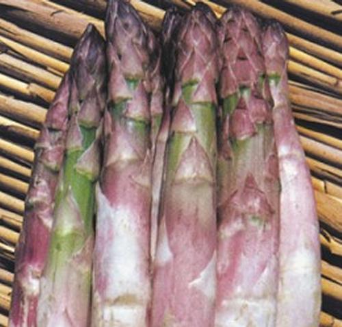Coltivare gli asparagi partendo dalle zampe o dal seme