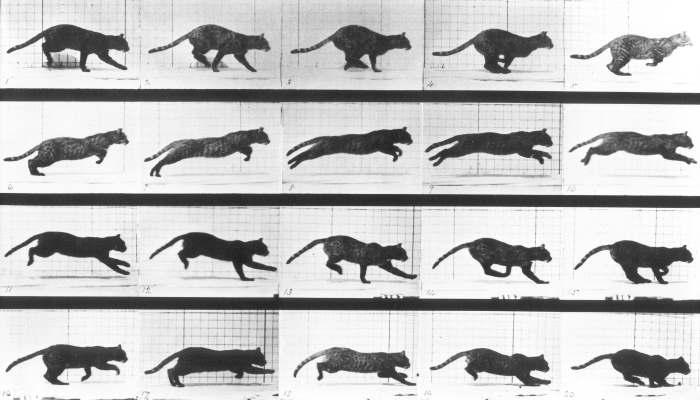La fotografia in movimento di Eadweard Muybridge in mostra ad Acireale fino al 19 febbraio 2017