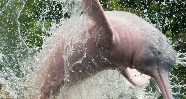 Cetacei odontoceti: meraviglie sconosciute