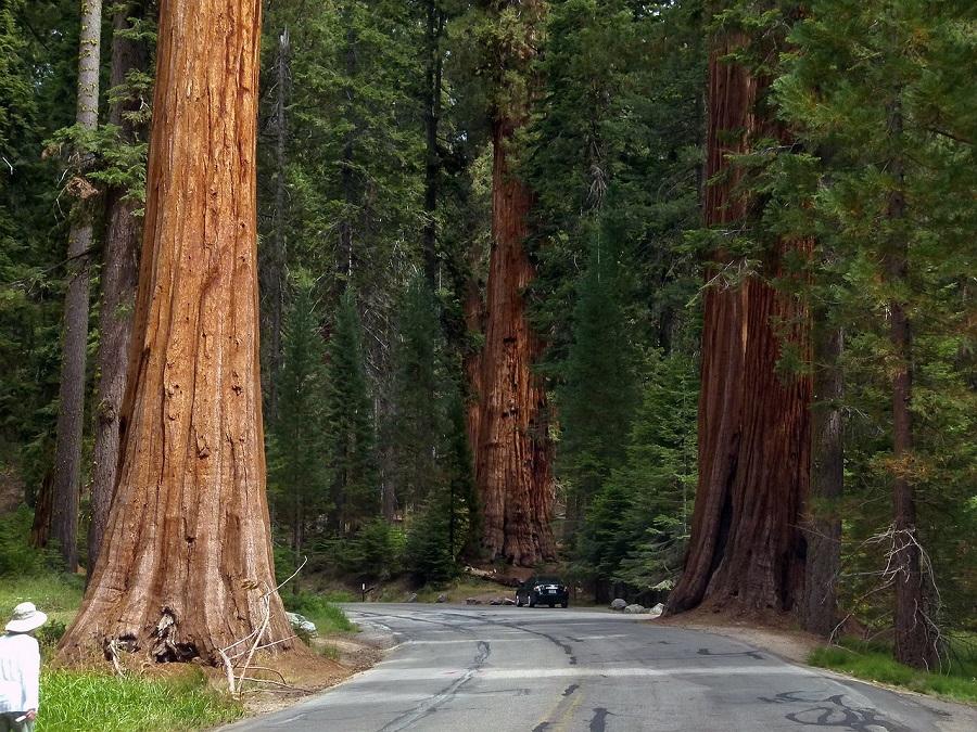 Gli alberi lungo le strade valgono 1 miliardo di dollari