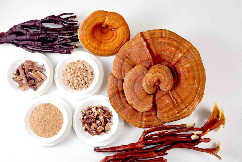 I funghi medicinali e le loro proprietà curative