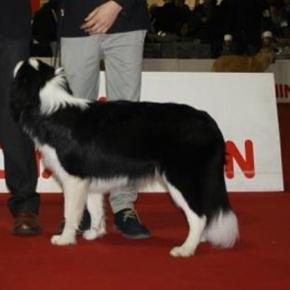 Strage di Cani all'Expo di Rende