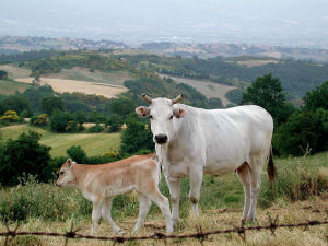 Torino: prima Giornata Nazionale della Carne Italiana