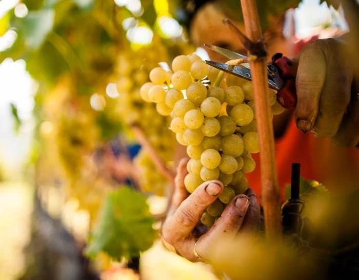 Mentre in Franciacorta inizia la vendemmia 2017, Coldiretti brinda all'esportazione del vino italiano