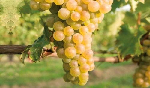 Vini d'Italia: D.O.C. Lugana
