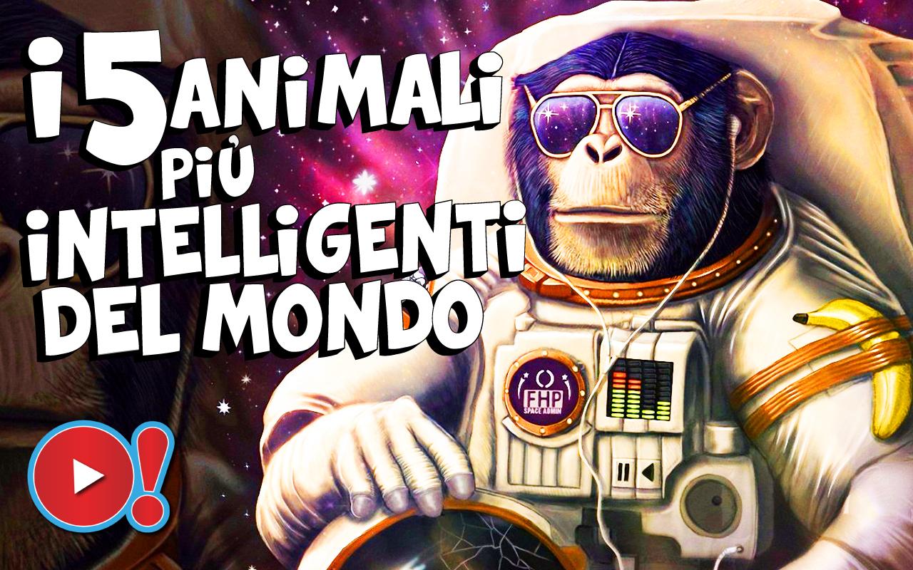 TOP 5 - I 5 animali più intelligenti del mondo VIDEO