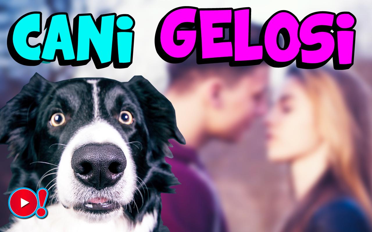 Video divertenti di cani gelosi: quando baciare il/la proprio/a partner diventa un'impresa impossibile!