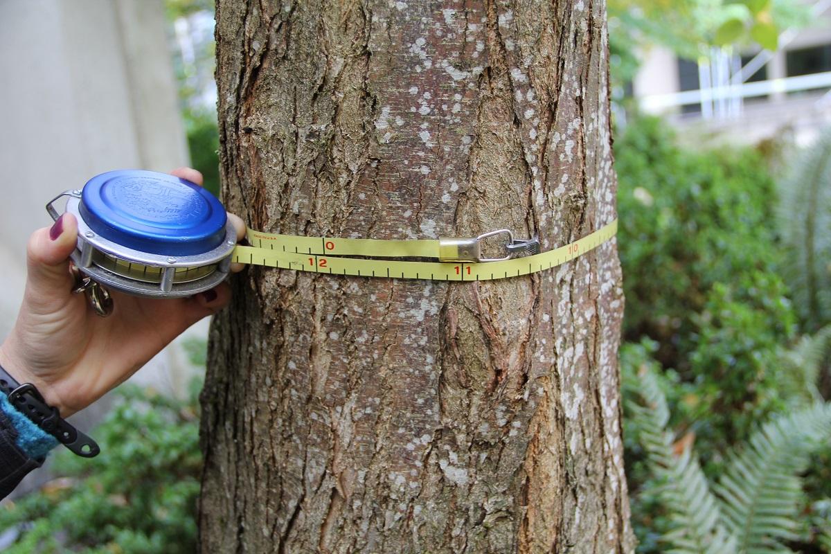 Conoscere gli anni di un albero