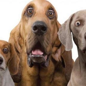 Cani: ecco le nuove regole del Ministero della Salute per tutti i possessori di cani
